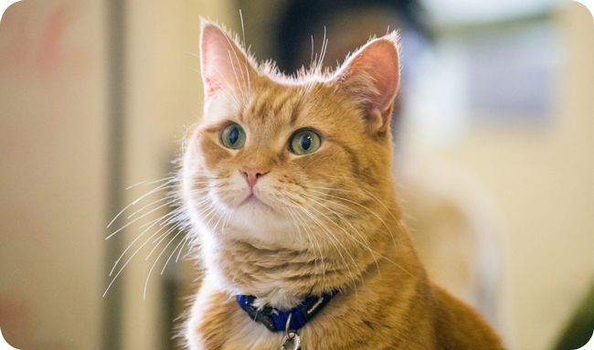 Film: Cat Bob