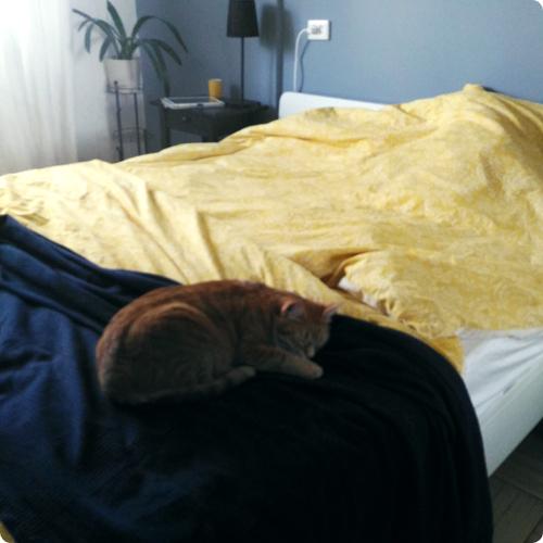 Сон на кровати
