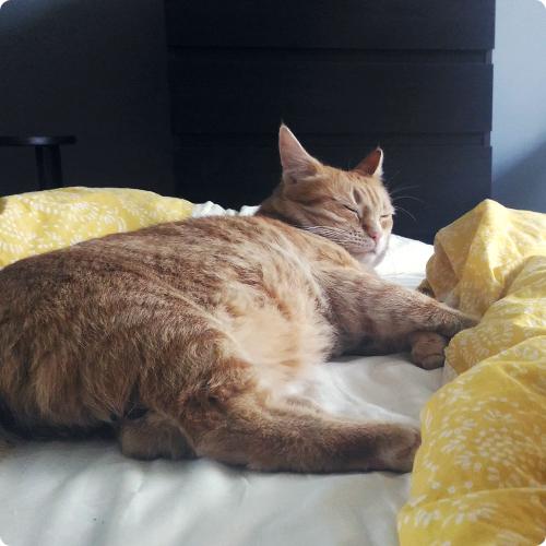 Деликатный кот